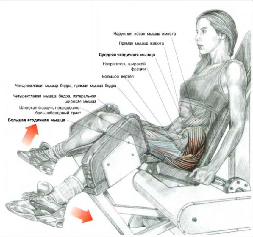 Разведение ног в тренажере сидя