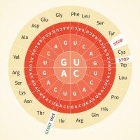 Аминокислоты: что это такое, виды, правила приёма